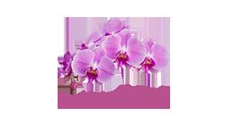 Wild Orchid Bar - Phnom Penh